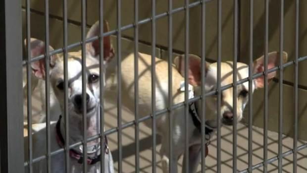 Video: Evitar modas al momento de adoptar una mascota