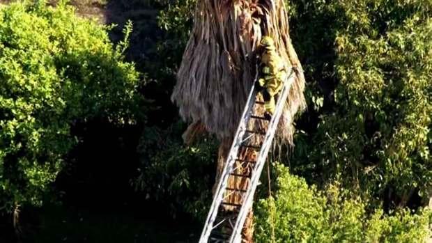 Video: Jardinero queda atrapado en las alturas