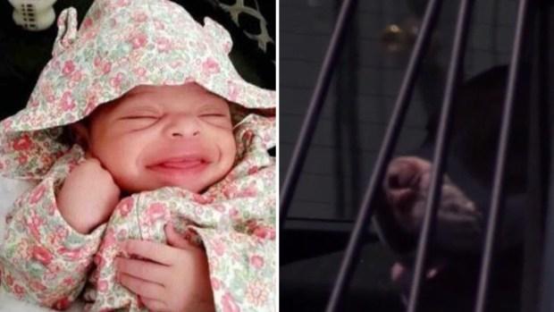Mascota enloquecida le mastica el rostro a bebé hispana