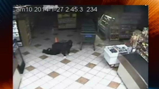 Video: Roban carnicería gateando