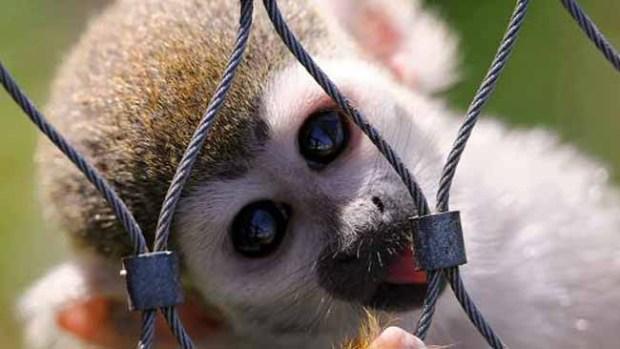 Bellos animales que matan
