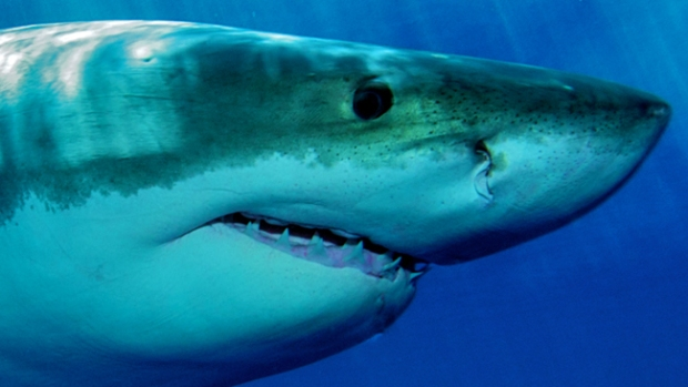 Video: Tiburón da gran susto a pescadores