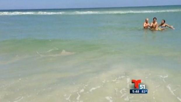Video: Bañistas asediados por tiburones