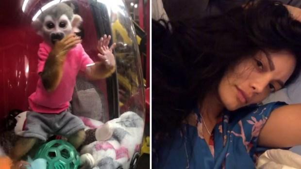 [TLMD - LV] Polémica por video de Zuleyka Rivera con monito encerrado