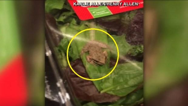 [TLMD - NATL] En la ensalada: intrépida rana viva asusta a familia
