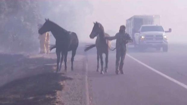 Dramáticas imágenes de rescate de animales en incendio
