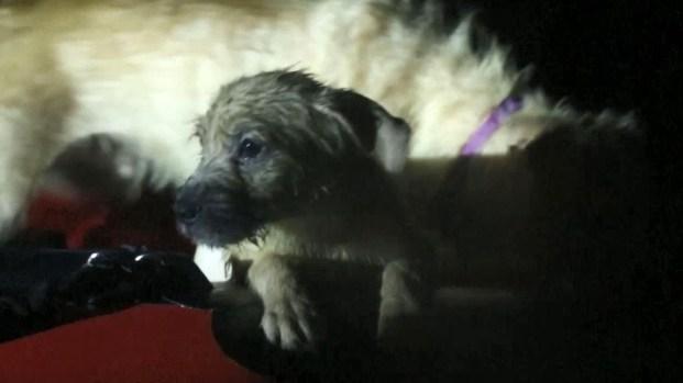 [TLMD - LV] Rescatan mascotas de zonas inundadas por Florence