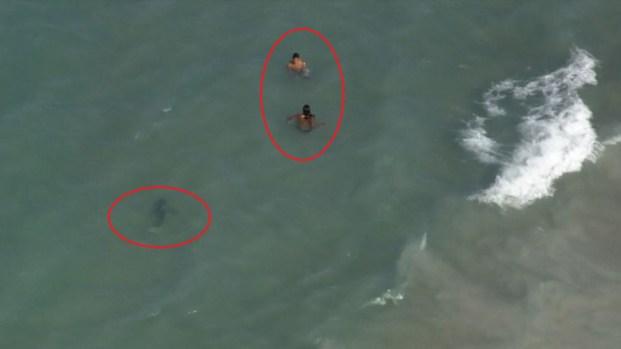Peligro: tiburón nada muy cerca de bañistas
