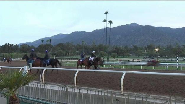 Sacrifican caballo herido durante carrera en Santa Anita