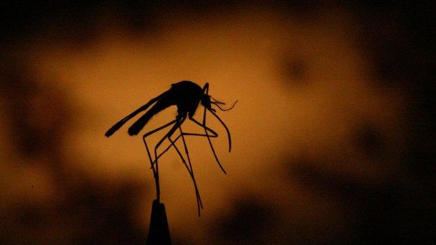 Primeros casos de virus del Nilo en condado de Riverside