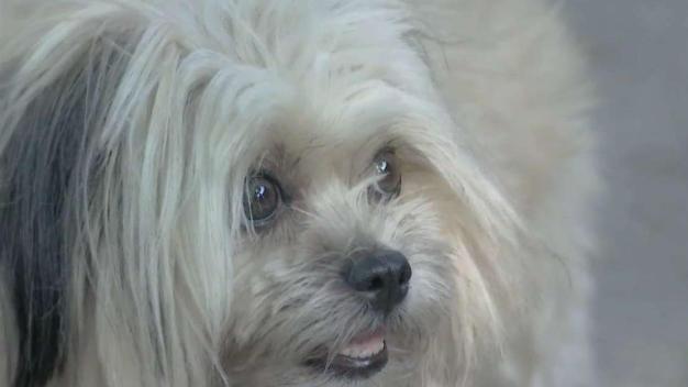 Temen envenamiento de perros en West Hollywood