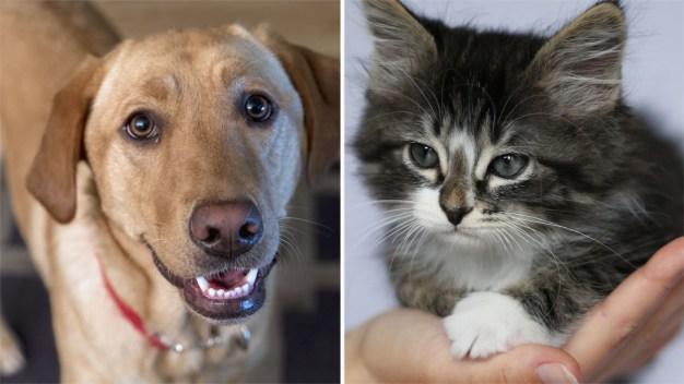 Desocupar los Albergues: miles de mascotas adoptadas
