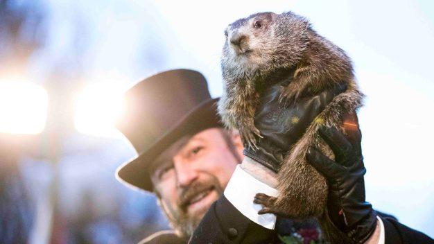 Marmotas predicen cuántas semanas quedan de invierno