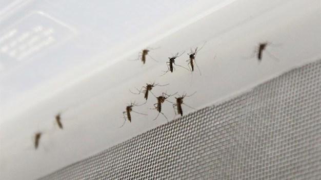 9fdc0dd39 Descubren molécula como fármaco contra el zika