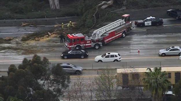 Cae árbol sobre tres vehículos en Autopista 405