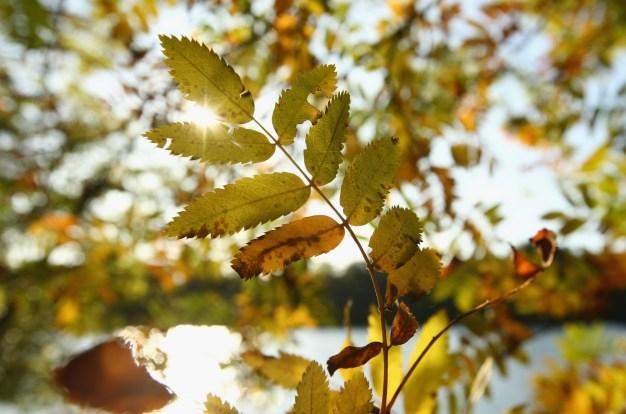Pronosticadores: la primera semana de otoño será 'montaña rusa'