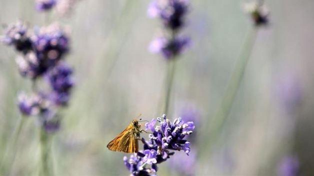 Alas de mariposas, clave para blindar tarjetas de crédito