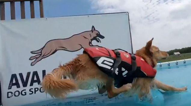 ¡Perro al agua! Por qué tu mascota debería aprender a nadar