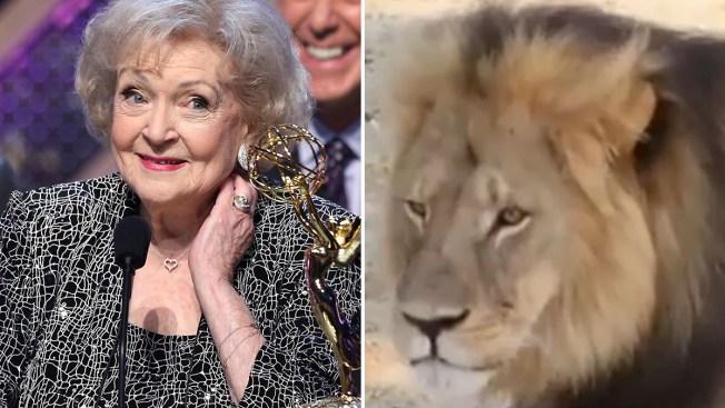 Furiosa Betty White por muerte de león Cecil