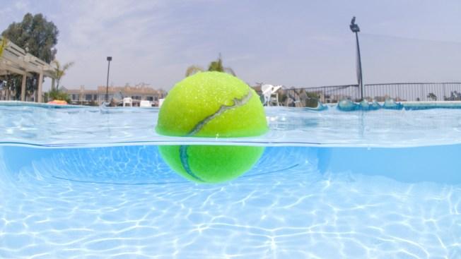 Perra saca pelota de piscina sin mojarse