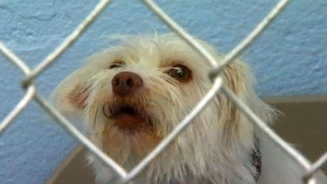 Alertan sobre eutanasia de animales en albergues