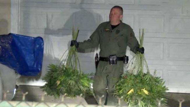 Horror entre vecinos por marihuana