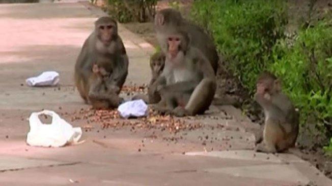 """Conoce el trabajo de los """"hombres mono"""""""