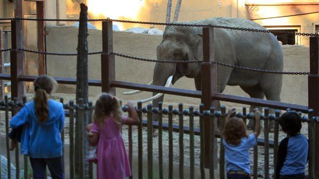 Desafía a elefantes