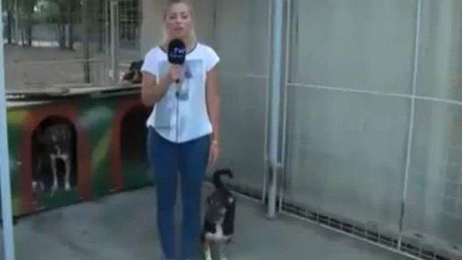 Insólita reacción de perro a reportera
