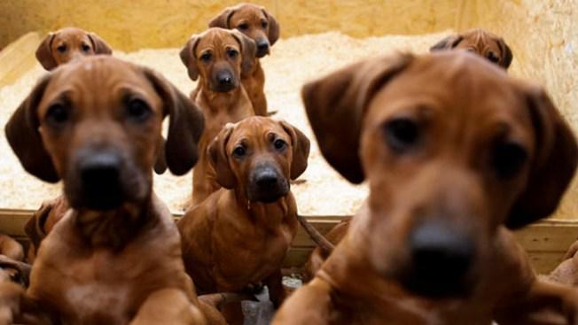 Buscan a dueños de mascotas