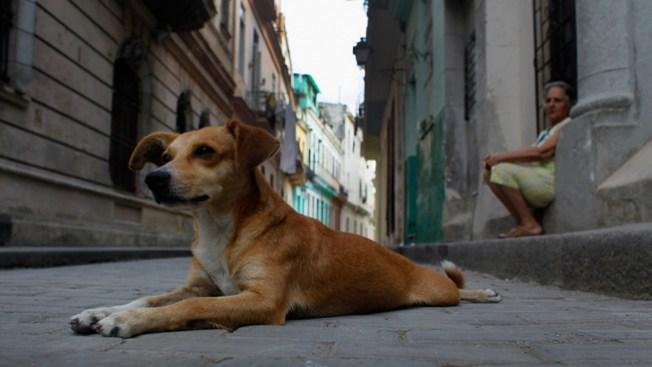 """""""Raras"""" las muertes por jauría de perros"""