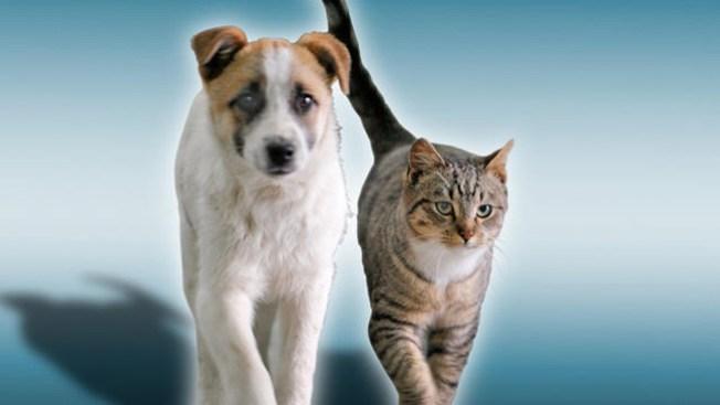 Al rescate de animales en Los Ángeles